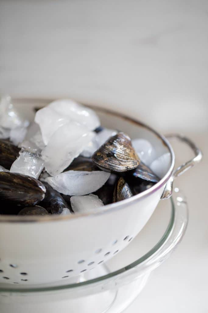 mussel in a colander covered in ice cubes